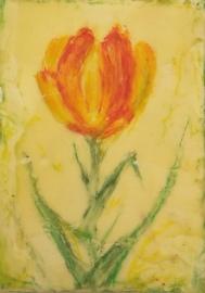 """Tulip, 5"""" x 7"""""""