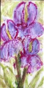 Iris Duet